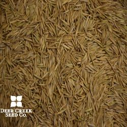 Revenue Slender Wheatgrass
