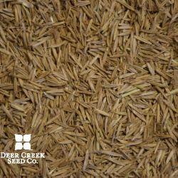 Mandan Canada Wild Rye