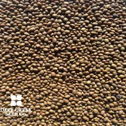 Kester's Bobwhite Trailing Soybean