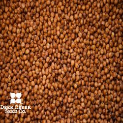 Multicut 300 BMR Brand Treated Sorghum Sudangrass