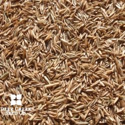 High Sugar Perennial Ryegrass