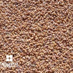 303 Multi-Leaf Alfalfa (Pre-inoculated)