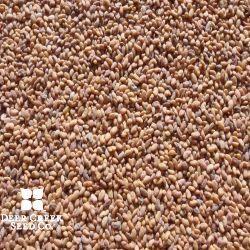 Vernal Alfalfa (Pre-inoculated)
