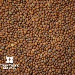 Daikon Oil Seed Radish