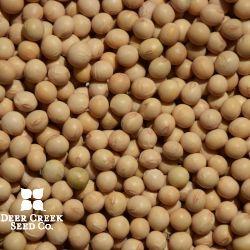 Forage Soybean