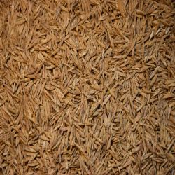 Smooth Bromegrass (Coated)
