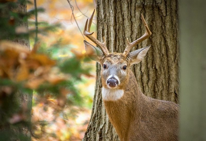 Food Plots For Pro's: Backwoods Food Plots for Prime Hunting