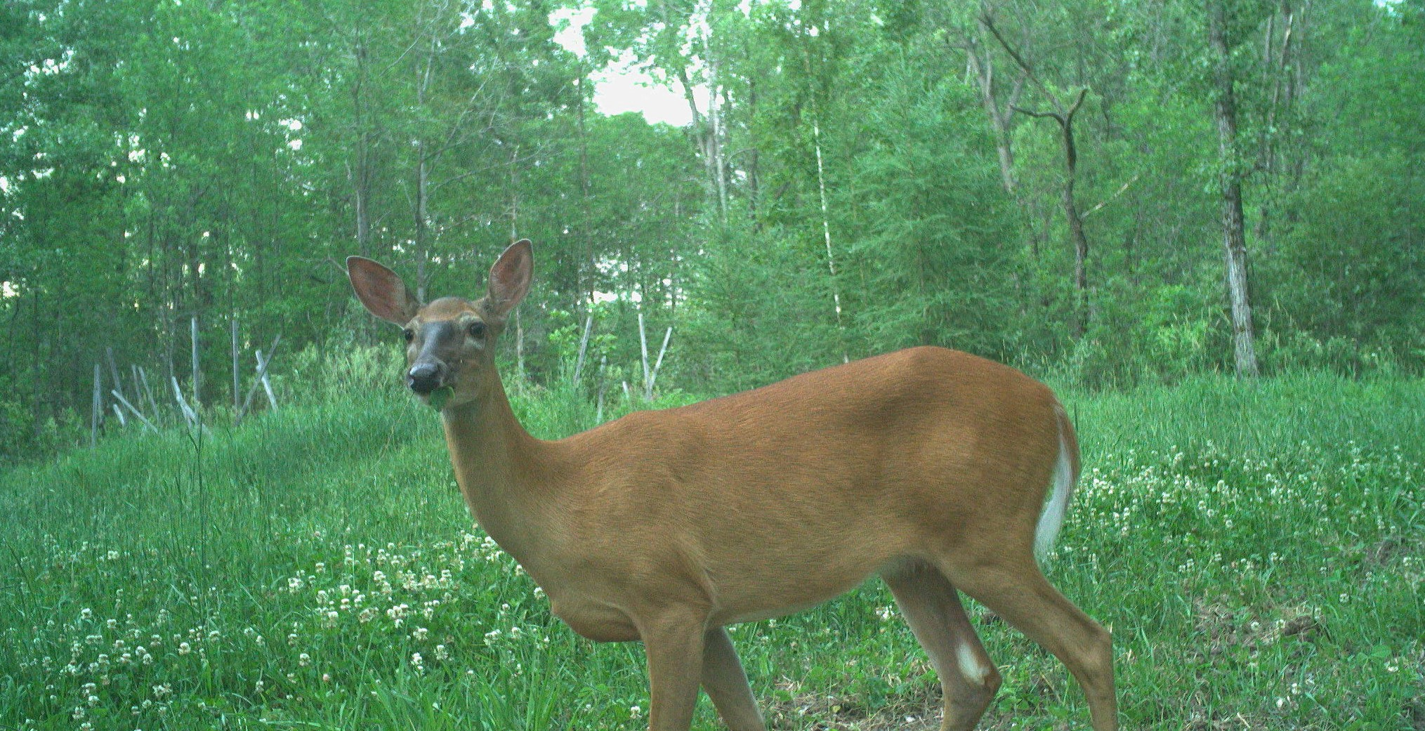 Food Plots for Pros: Year-Round Nutrition Management