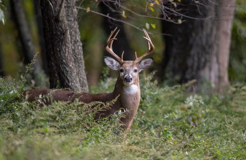 Food Plots for Pros: Soil Management For High-Performance Food Plots