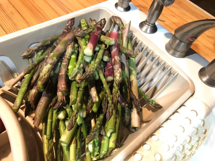 The Basics on Growing Asparagus for Homesteaders