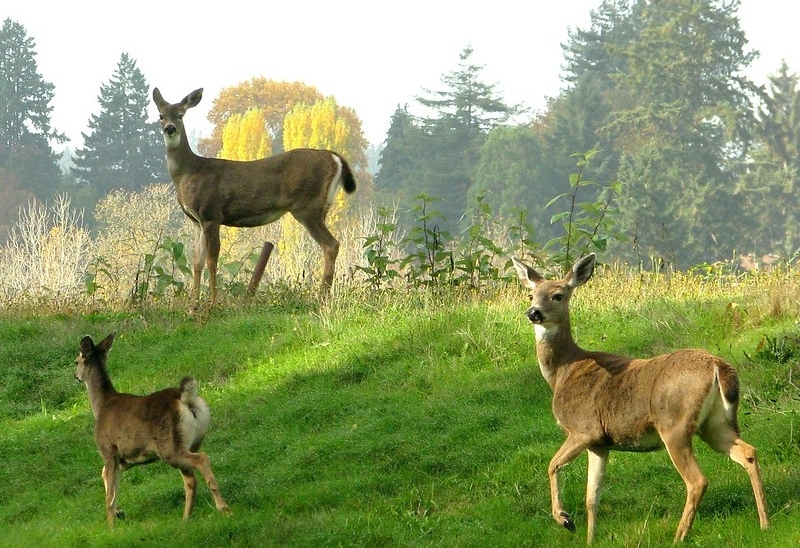 Food Plots for Pros: Planning Crop Rotation for Healthy Soils & Hungry Deer