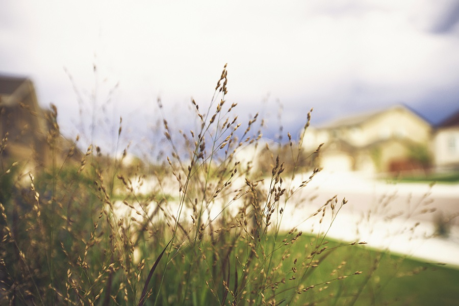 Benefits of Incorporating Native Grasses into Your Landscape