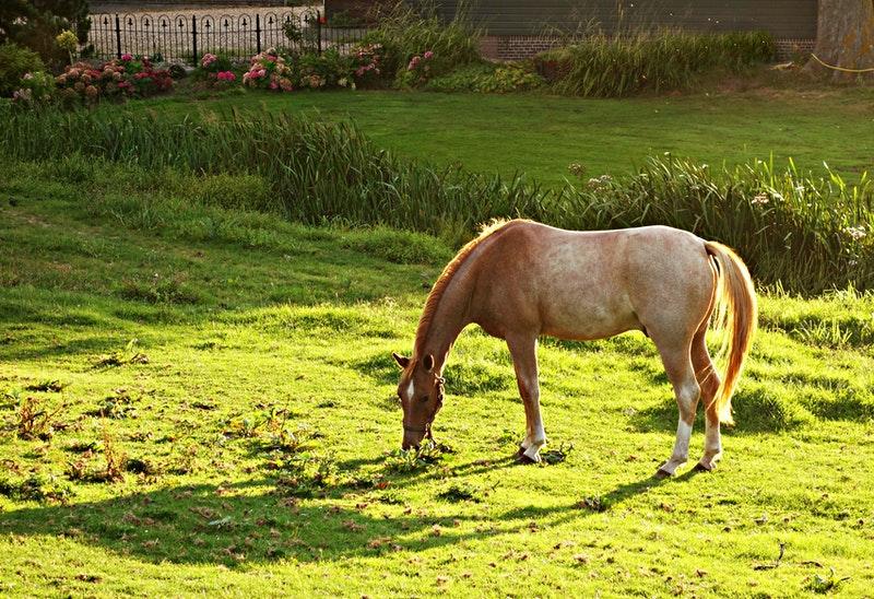 horse eating on a farm
