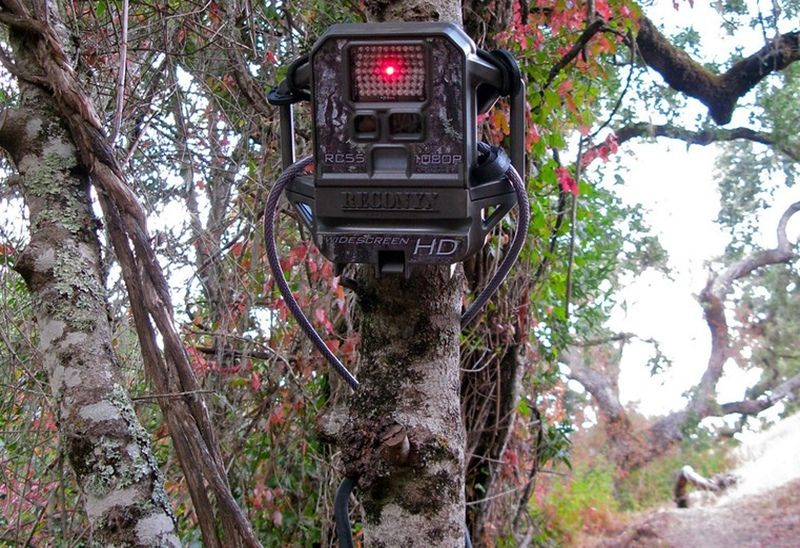 game camera in overlooking food plot