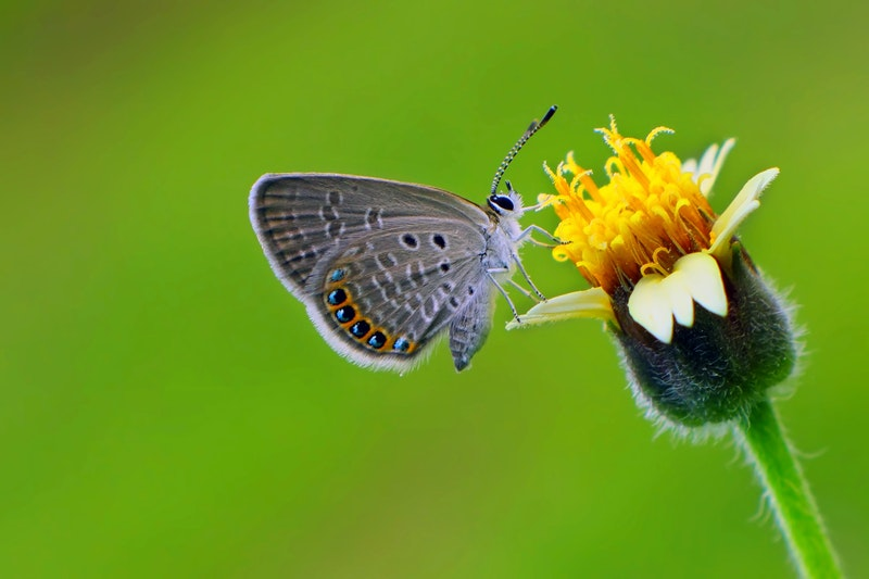 Butterfly pollinating a wildflower