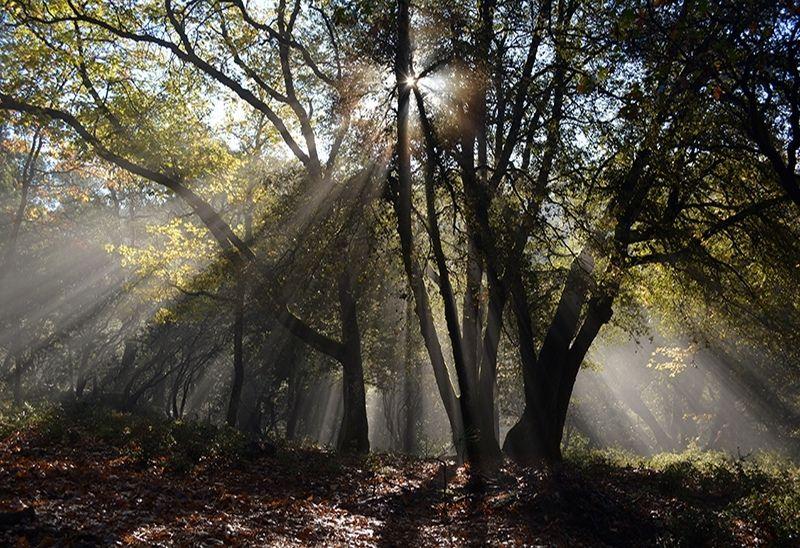 sunlight hitting food plot through trees