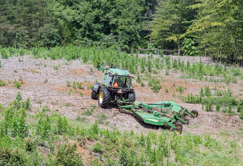 tractor mowing food plot