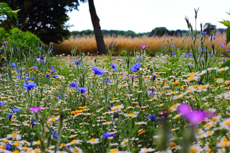 pollinator mix field